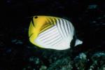 Рыбная экзотика.