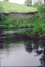 р. Вашана, д. Новоселки. Рыбалка