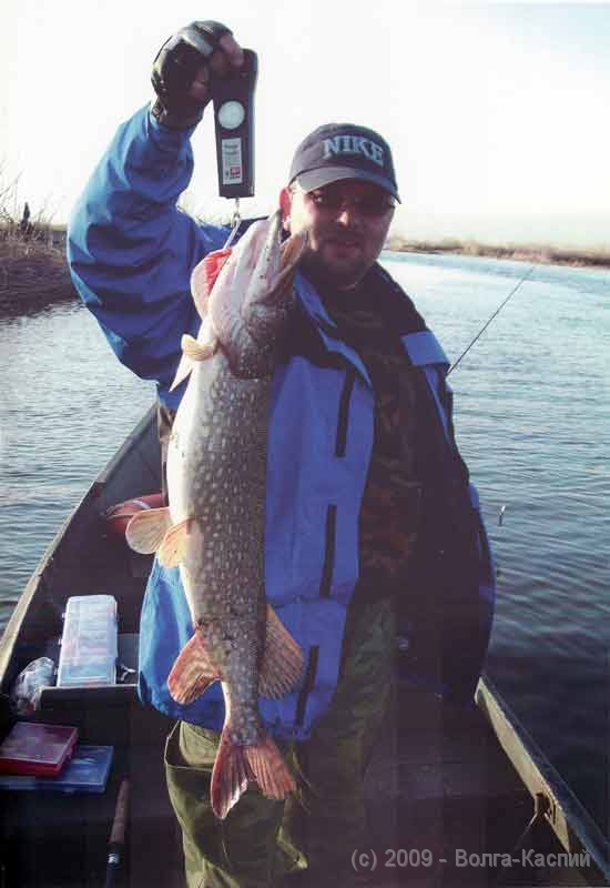 недорого рыбалка на волге