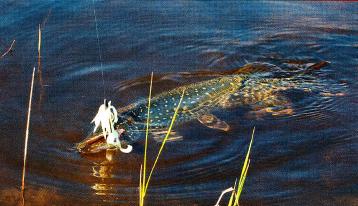 чем лучше ловить щуку на мелководье