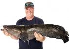 Американскому рыбаку повезло с гигантским змееголовом